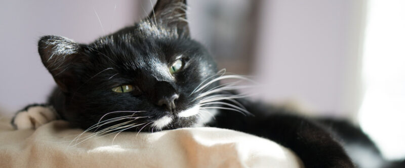 Bild einer Hauskatze